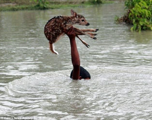 Boğulmak üzere olan geyiğe yardım eli