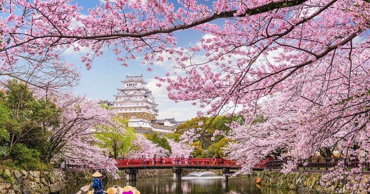 Sakura nedir, ne demek? Sakura ne anlama geliyor? İşte detaylar...