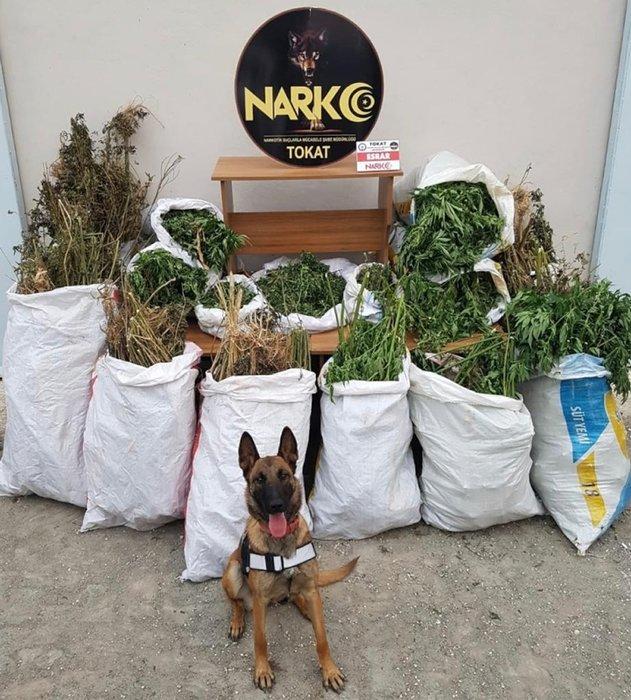 Uyuşturucu sanığı: Bahçeye mısır ektim, esrar çıktı