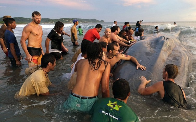 Balina karaya vurdu