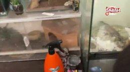 İstanbul'da sürüngen hayvan baskını! Ejder ve piton yılanları... | Video