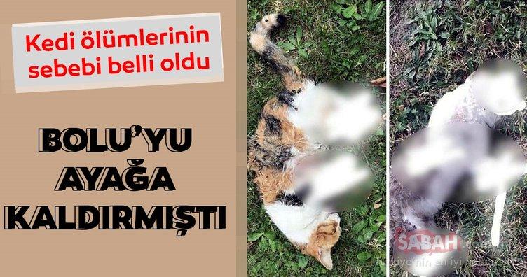 Bolu'yu ayağa kaldıran kedi ölümlerini cinayet büro çözdü