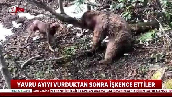 Son dakika: Sosyal medyayı ayağa kaldıran olayda yeni gelişme! Yavru ayıya işkence eden cani gözaltına alındı   Video