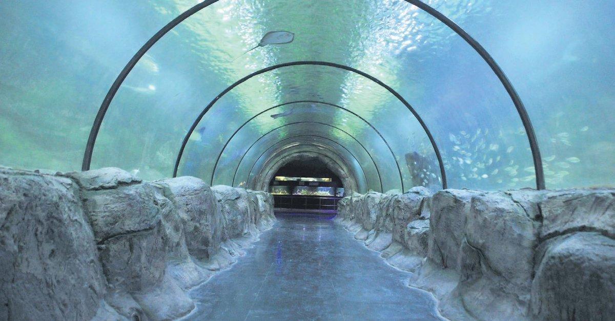 Bozkirin Ortasinda Deniz Dunyasi Ankara Baskent Haberleri