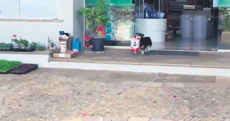 Her sabah veterinere gidip yemeğini alıyor