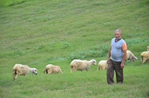 Kocaeli'de mavi dil hastalığı karantinası