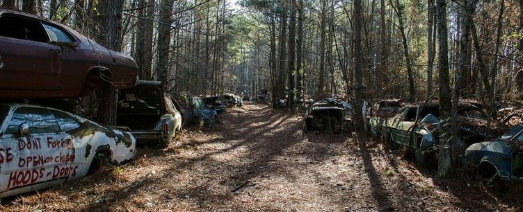 Ormandaki araba mezarlığının sırrı