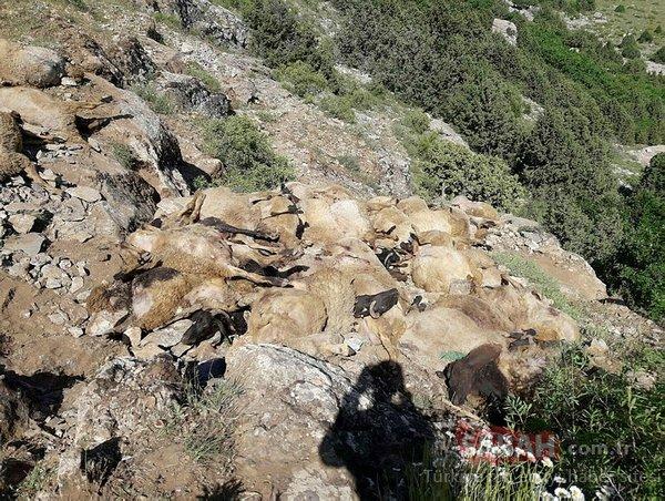 Van'ın ardından Bitlis'te de koyunlar telef oldu!