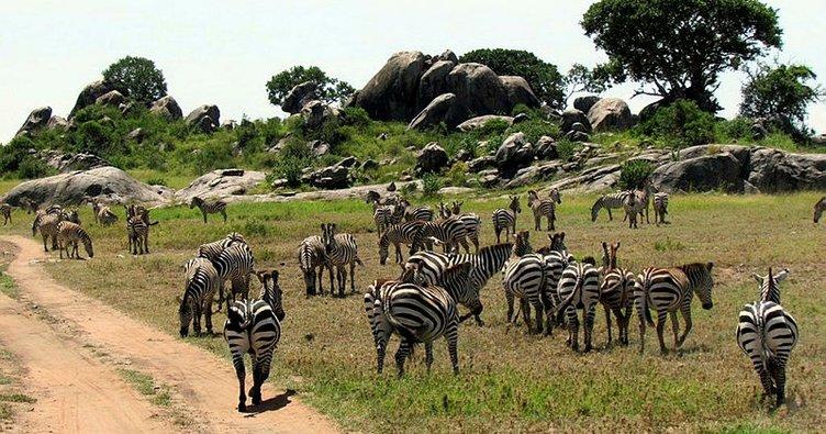 Tanzanya'daki Serengeti Afrika'nın en iyi milli parkı seçildi