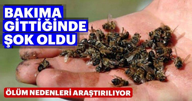 Muğla'da toplu arı ölümleri