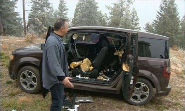 Ayılar arabayı böyle parçaladı