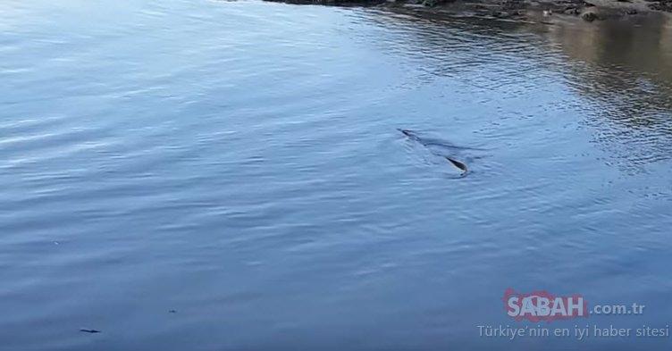 Gizemli deniz yaratığı balıkçıyı şaşkına çevirdi!