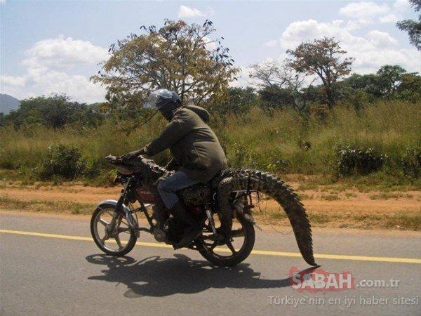 Böyle şeyler sadece Afrika`da olur!