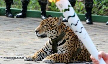Rüyada jaguar görmek ne anlama gelir?