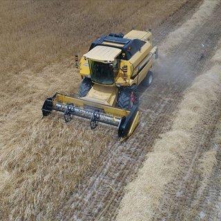 Ata yadigarı 'siyez' buğdayında hasat sevinci