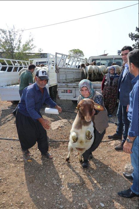 Koyunları çalınan Ayşe teyze gözyaşlarını tutamadı! Bakan Pakdemirli olaya müdahale etti