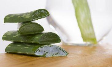 Aloe vera ile saç bakımı: Aloe vera saç maskesi nasıl yapılır? İşte tarifi