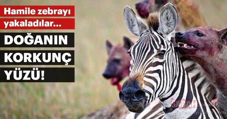 Vahşi doğada hayatta kalma savaşı!