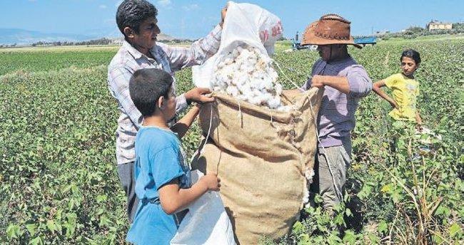 Hatay ekonomisine tarım yön veriyor