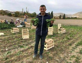 İstanbul'a ıspanak gönderilen tarlada 'şeytan elması' otu çıktı