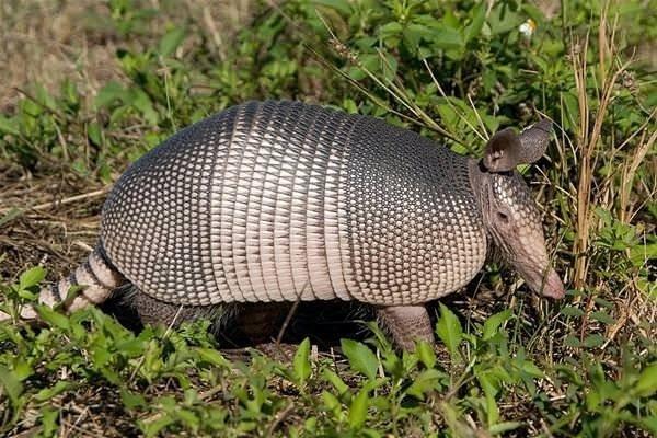 Dünyanın en şaşırtıcı canlıları