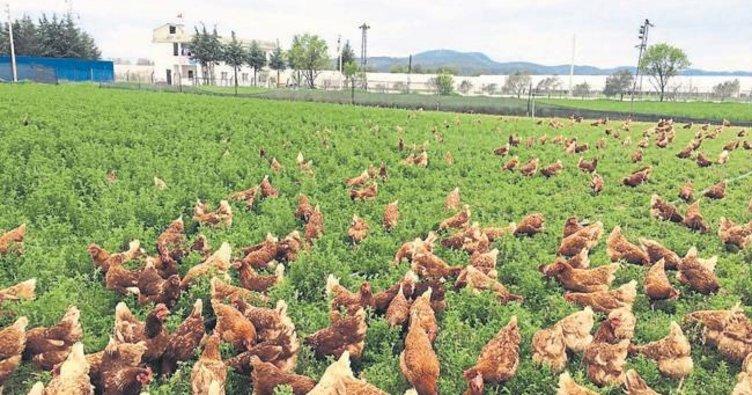 Günde 21 milyon yumurta üretiyoruz