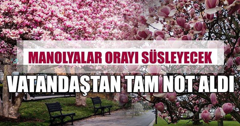 Taksim'deki manolya ağaçları beğenildi