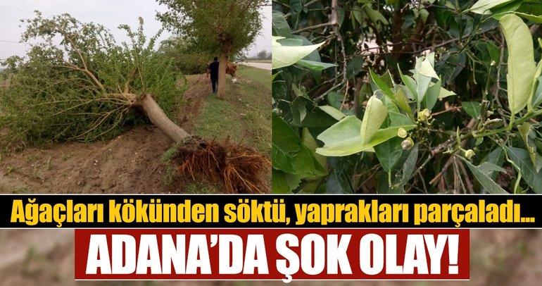 Adana'da şok olay! Ağaçları kökünden söktü