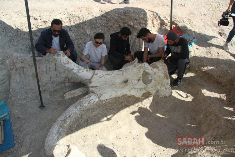 Kayseri'de 7 buçuk milyon yıllık 'fil' fosili bulundu