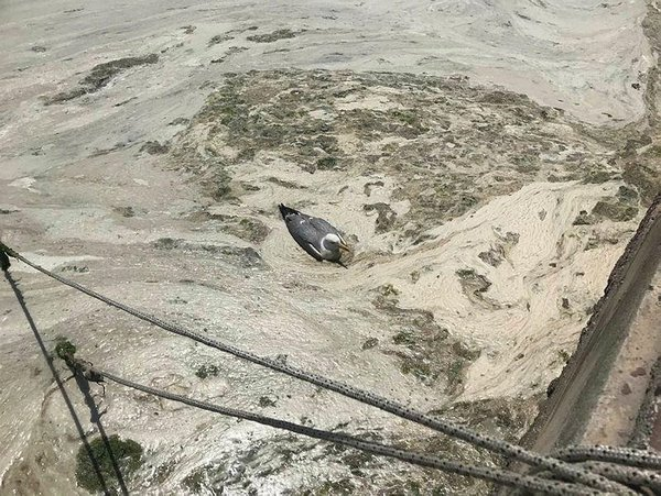 SON DAKİKA HABERİ: 'Salya' sorunu çözülüyor! Bakanlık Marmara Denizi için harekete geçti 14