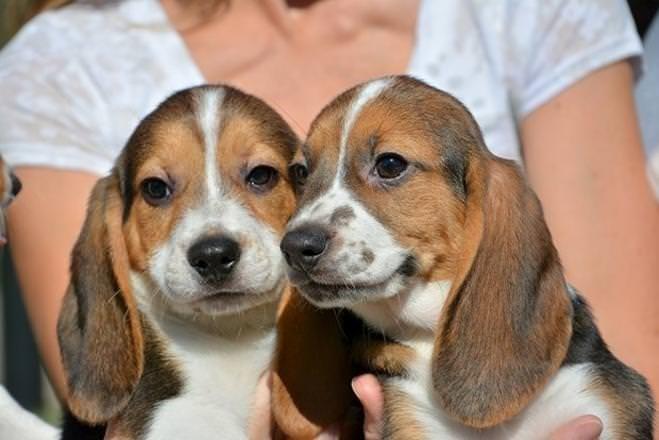 Bu köpekler dünyada bir ilk