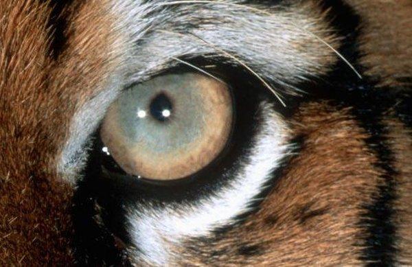 Gözlerinden tanıyabildiniz mi?