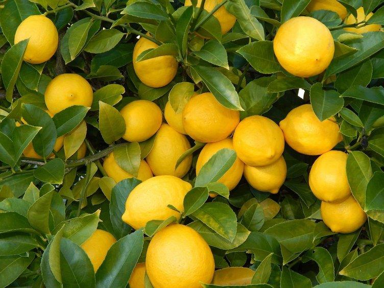 Limonun üzerine tuz serpmenin faydaları