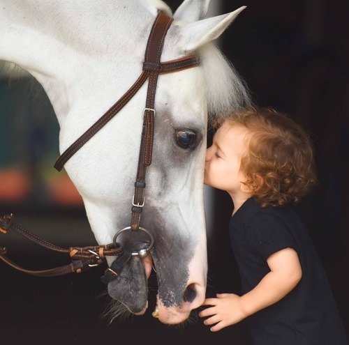 Atların en asil hayvanlar olduğunun ispatı