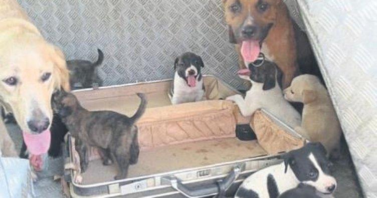 Evinin bahçesinde 15 köpek karşıladı