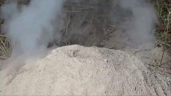 Karınca yuvasına alüminyum dökülünce ortaya çıkan sonuç şaşırttı