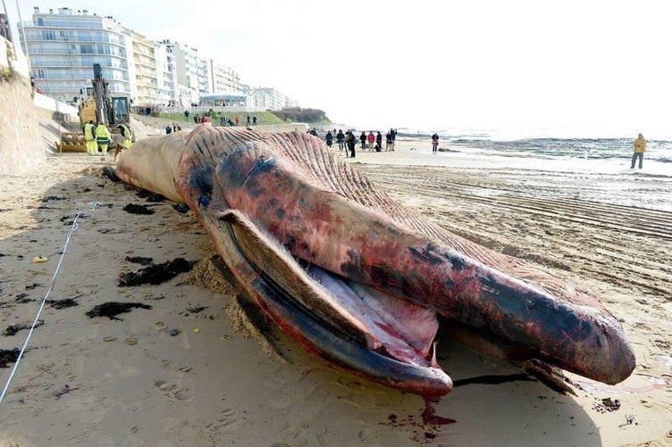 Sahile vuran yaratık korkuttu