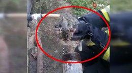 Muğla'da kafası demir boruya sıkışan yavru kediye ilginç operasyon | Video