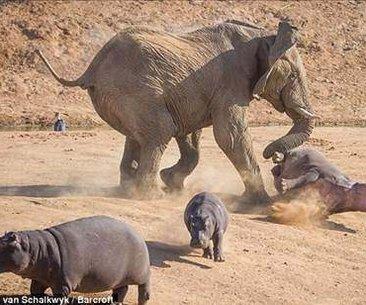 Vahşi doğanın en acımasız saldırıları