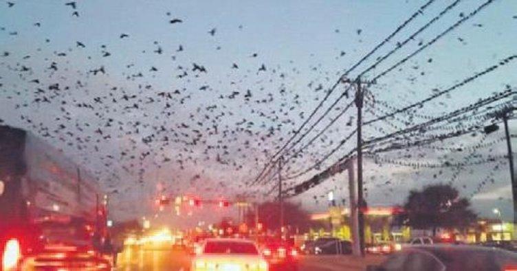 Hitchcock'un kuşlar filminden bir sahne
