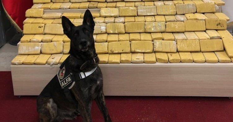 Pul biber ile kamufle edilen eroin, narkotik köpeği Alfa'ya takıldı