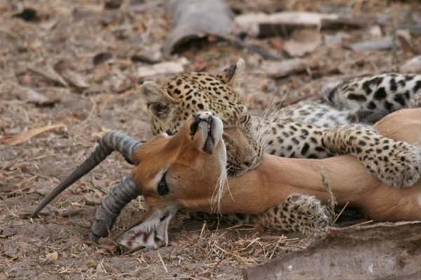 Çitadan beklenmedik hareket!