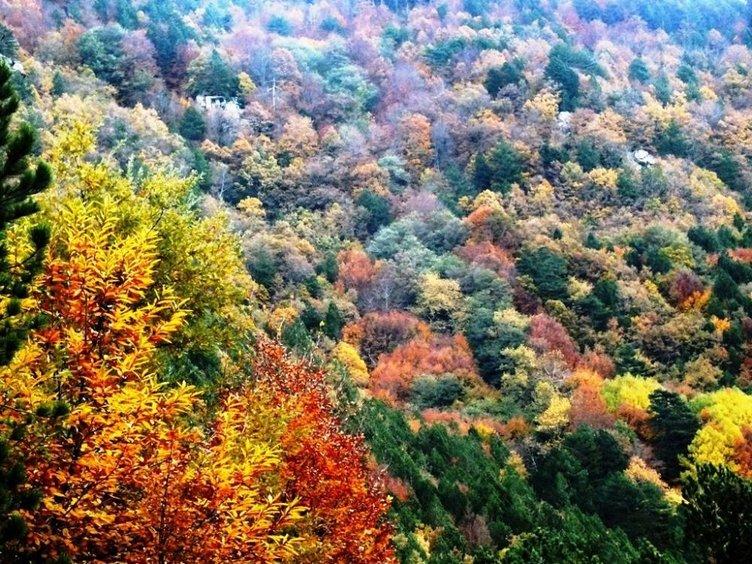 Kaz Dağları rengârenk