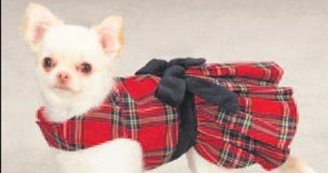 Köpek giysileri, derilerine zarar veriyor