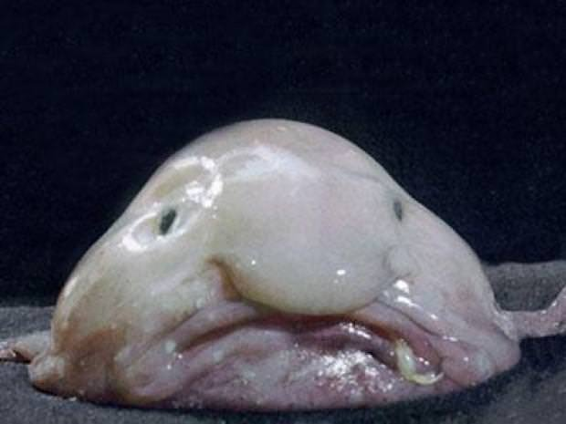 En tuhaf deniz yaratıkları