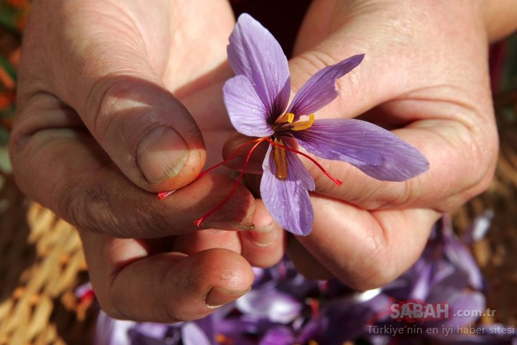 Mucizevi çiçek karaciğer yağlanmasını tedavi ediyor!
