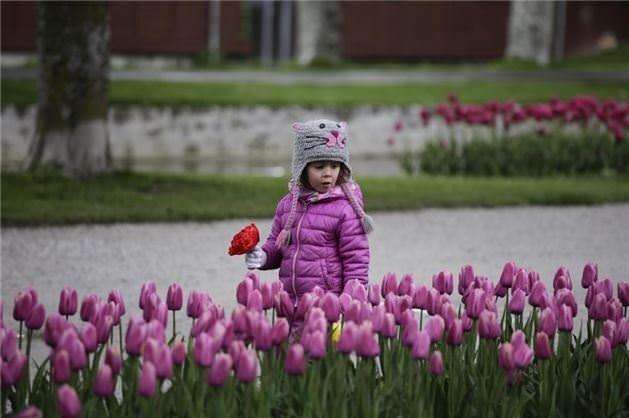 30 bin Türk Lalesi İsviçre'de