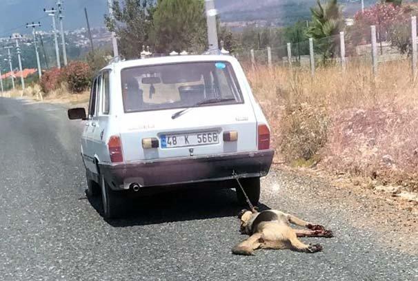 Köpeği otomobilin arkasında sürükleyen kişinin cezası belli oldu