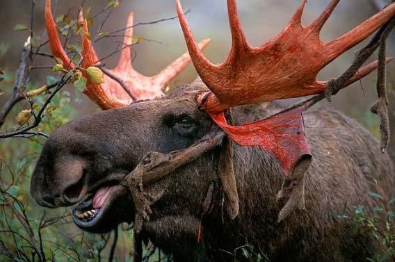 Vahşi doğanın korkunç yüzü...