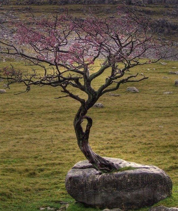 Zorluklara karşı koyan ağaçlar.